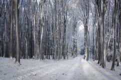 Skog i vinter med snö Arkivbild