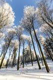 Skog i vinter på en Sunny Day Fotografering för Bildbyråer