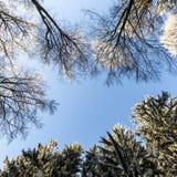 Skog i vinter på en Sunny Day Arkivbild