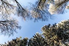 Skog i vinter på en Sunny Day Arkivfoton