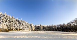 Skog i vinter på en Sunny Day Arkivfoto