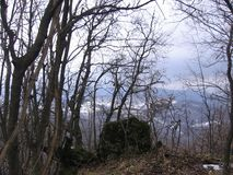 Skog i vintern Arkivbild