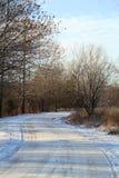 Skog i vintern Arkivbilder