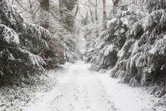 Skog i vintern med vit snö och män som går på vägen arkivfoto