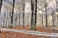 Skog i vintersäsong arkivfoton