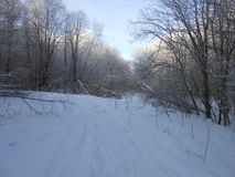 Skog i vintertiden royaltyfria foton