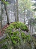 skog iii Royaltyfri Fotografi