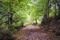 skog inom Arkivbild