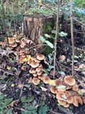 skog isolerad champinjonwhite Arkivbild