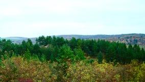 Skog kullar på jordningen fotografering för bildbyråer