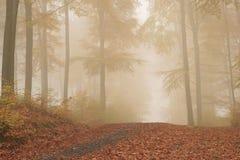 skog långt Royaltyfria Bilder