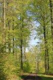 skog långt Royaltyfri Foto