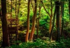 Skog Märchenwald Siebengebirge royaltyfri fotografi