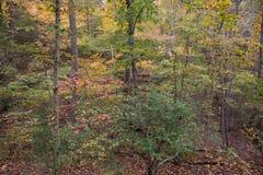 Skog med Autumn Color Palette Arkivfoto