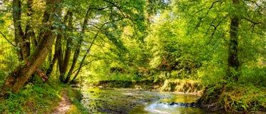 Skog med bäcken royaltyfri foto