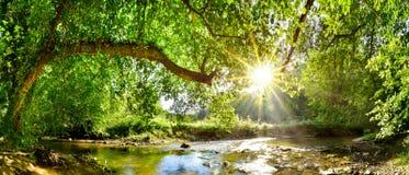 Skog med bäcken och den ljusa solen arkivfoto