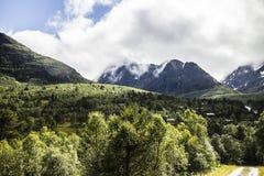 Skog med berg i bakgrund Arkivfoto