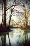 Skog med dammet i höst Arkivfoto
