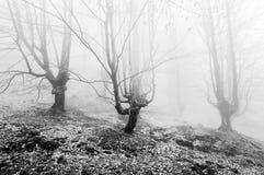 Skog med dimma fotografering för bildbyråer