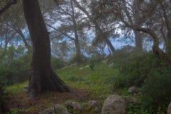 Skog med dimma bredvid havet arkivfoton