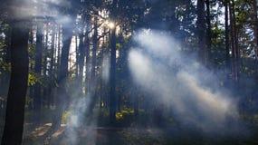 skog med dimma och varmt ljus arkivfoton