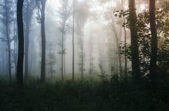 Skog med dimma på solnedgången royaltyfria foton