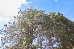 Skog med en blå himmel royaltyfri foto