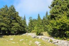 Skog med ett berg i bakgrunden schweiziska alps Arkivfoto