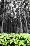 Skog med grön lövverk Arkivbild