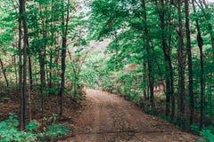 Skog med gröna träd och smuts royaltyfria bilder