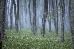 Skog med gröna växter och vita blommor i vår Arkivfoton