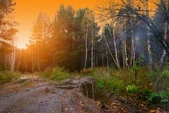 Skog med gul lövverk av björkträd och granar i nedgången exponerad av de orange strålarna av den utgående solen arkivbild