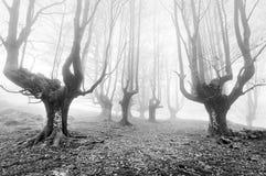 Skog med läskiga träd royaltyfria foton