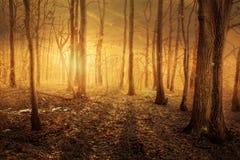 Skog med magical ljust Arkivbilder