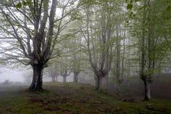 Skog med morgon Royaltyfri Fotografi