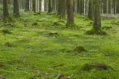 Skog med mossa Arkivbilder