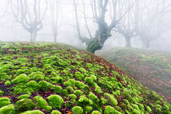 Skog med mossabubblor Royaltyfri Fotografi