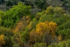 Skog med sidor för nedgånghöstfärg arkivbilder