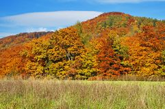 Skog med sidor i höstfärger Arkivbilder