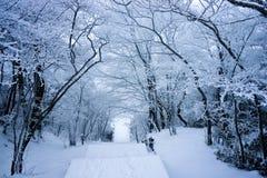 Skog med snö arkivbild