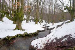 Skog med snö Otzarreta Royaltyfri Bild