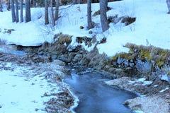 skog med snow royaltyfri bild