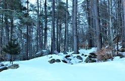 skog med snow arkivfoto