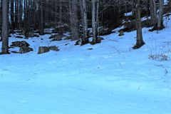 skog med snow fotografering för bildbyråer
