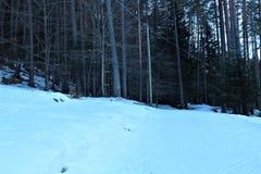 skog med snow arkivbilder