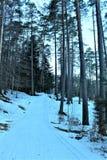 skog med snow royaltyfri fotografi