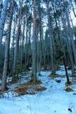 skog med snow royaltyfri foto