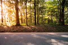 Skog med sol- och linssignalljuset arkivfoton