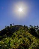 Skog med solen över Arkivbild