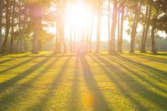 Skog med solen royaltyfri fotografi